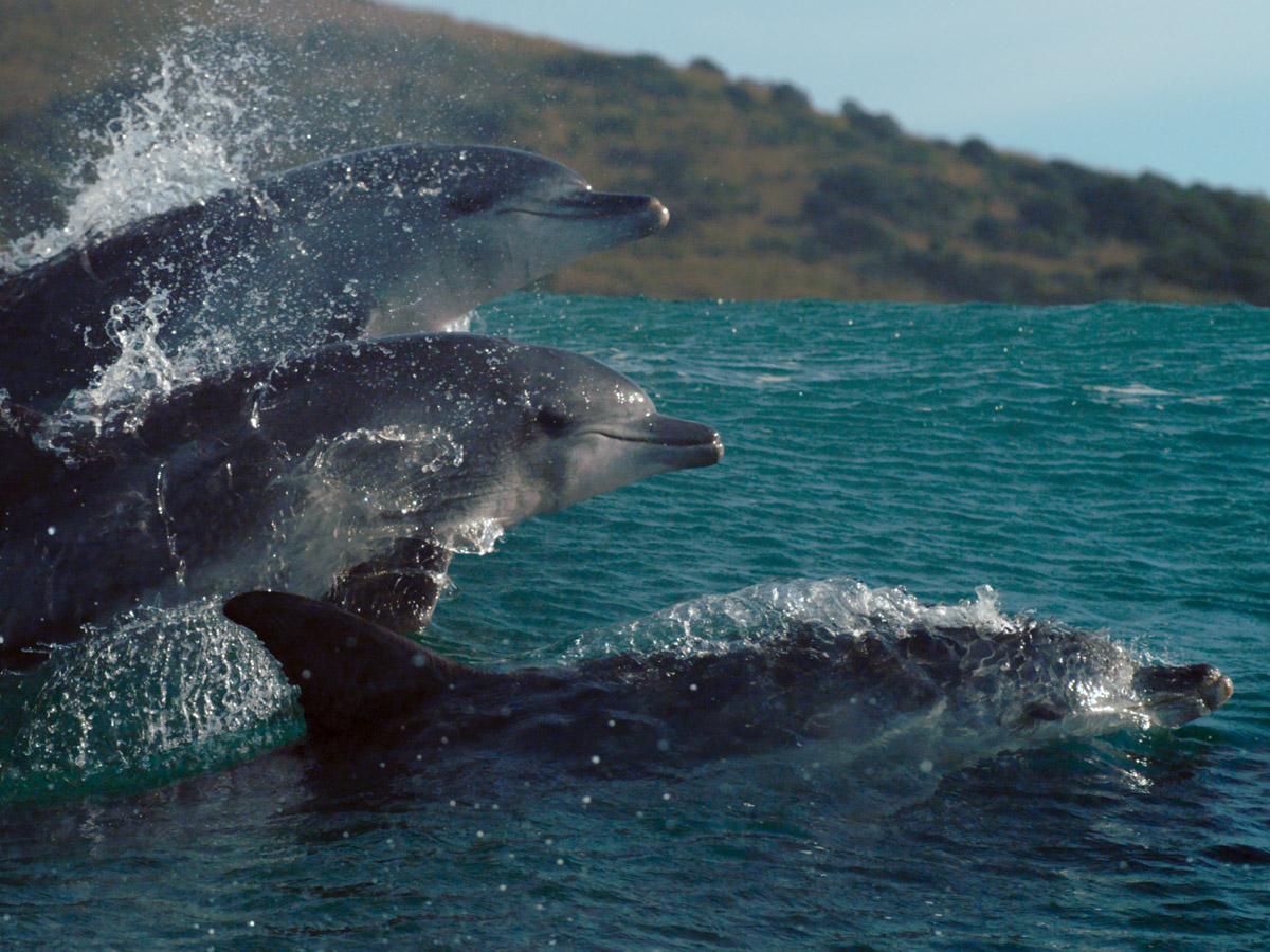 Blue-Oceans-dolfijnen-2