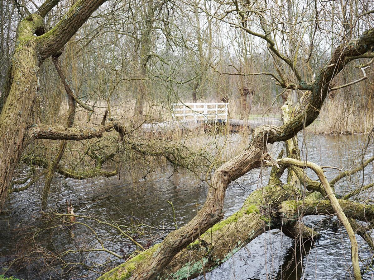 Delft-Groene-Hart-wildernis