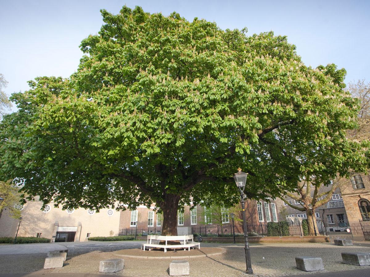 Postzegelboom-bij-Noordeinde-002