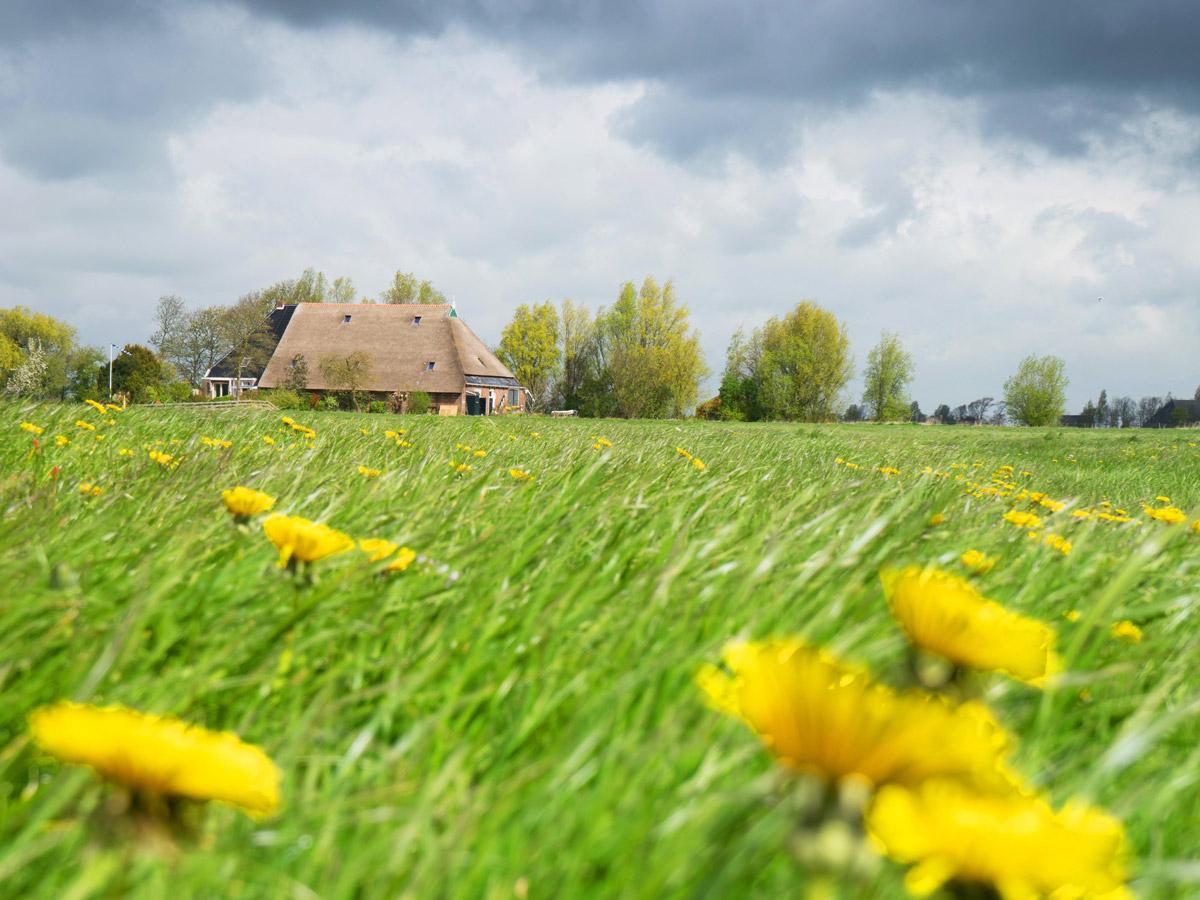 FAC-Friesland-boerderij-1